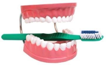 Dental Care Model