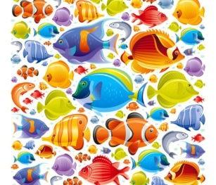 Fish Colourful