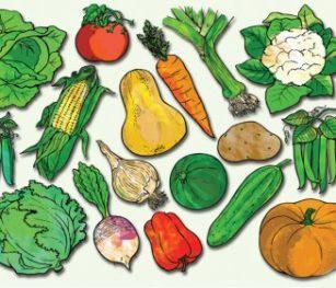 Vegetables Poster Rgs Stp11