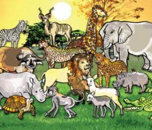 Wildlife Poster Rgs Stp17